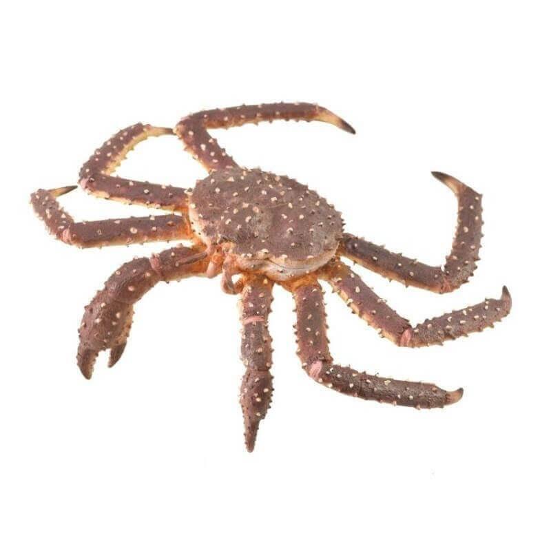 Collecta Θαλάσσια Ζώα - Βασιλικός Κάβουρας